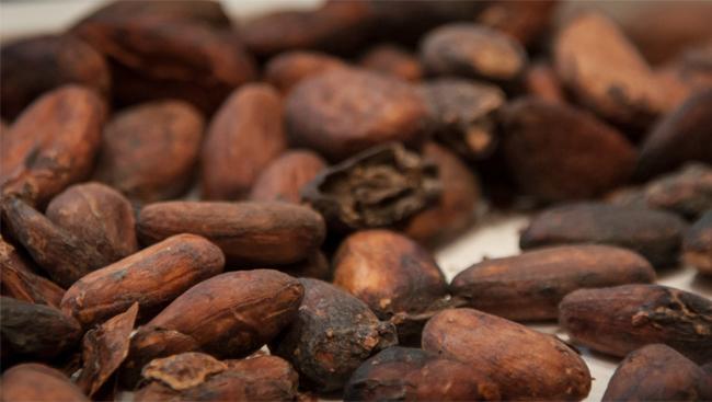 expo2015 cacao