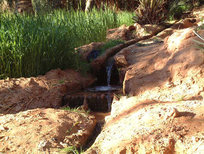 rivière survivre désert